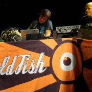 Goldfish - Fotocredits Warrenski - Wikimedia Commons (CC BY-SA 2.0)