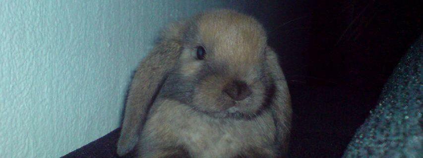 Flappie, konijn - Fotocredits Djuna Vaesen - (ArtiestenNieuws) - Kraantje Pappie - Het Antwoord van Flappie