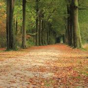 Herfst Top 5 typische herfst nummers