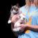 Grumpy Cat @ 2014 VidCon - Foto: Gage Skidmore - Bron: Flickr (CC BY-SA 2.0)