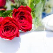 roos, rozen, liefde, Valentijnsdag - Foto: Lukas - (Bron: Pexels) Publiek Domein