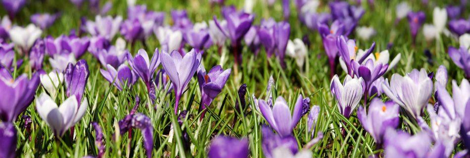 Lente - Credits: Pixabay (CC by 0)