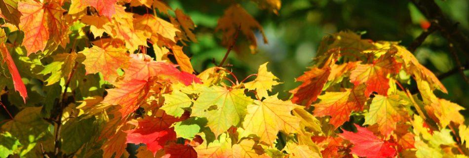 Autumn - fotocredits: Thomas Hendele - Pixabay (CC0 1.0)